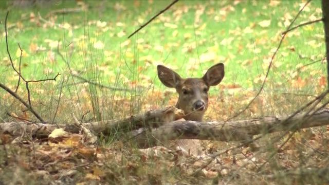 DNR grants to help deer habitat_72980814