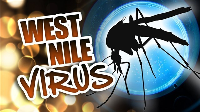 First West Nile virus activity of 2017 detected in Michigan