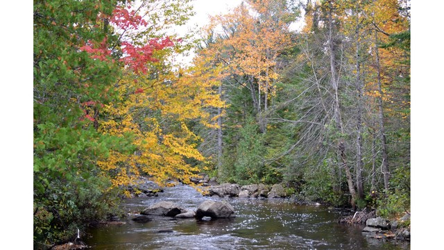 The importance of streamside and lakeshore habitat