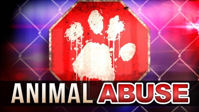 UPDATED: Police investigating pitbull shot in head, left on side of road in Iron County